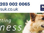 Get Insurance Cover For All Types of Pet Businesses