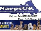 Get 14 day's Free Trial Pet Sitters Software & App - NarpsUK