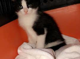 7 month old kitten