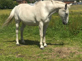 Horse wanted for loan