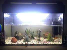 Fish tank with 3 goldfish