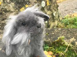 6 bunnies need a good home