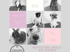 Mobile Pet Grooming in the Comfort Of Your Own Home