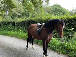 Quality  3 Year Old Section C Filly