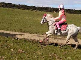 Lead rein/first pony