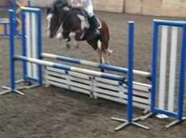 Freelance riding instructor