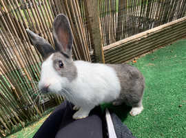 MY LOVELY FEMALE RABBIT LOOKING FOR A FRIEND