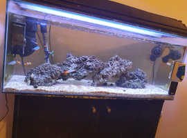 Hi there full set up with fish too need gone asap