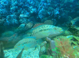 Jack Dempsey Fry £4 or 3 for £10