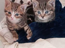 Small cat baby