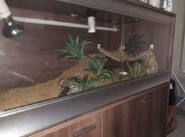 Vivarium, 4 feet with cabinet in Walnut