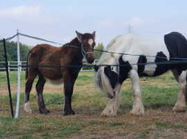 6 month old colt
