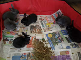 Gorgeous baby rabbits