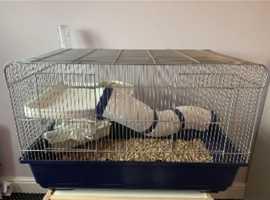 3 male rats