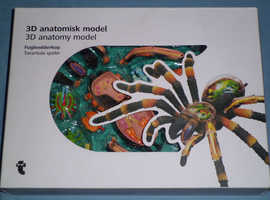 Tarantula 3D Anatomy Model (new)