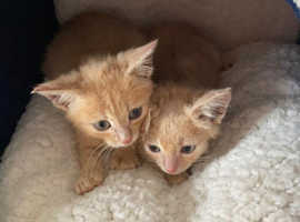Two kittens looking for their forever homes