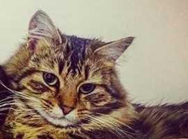 lost cat in aberdare