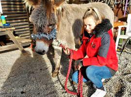 Super pretty donkey
