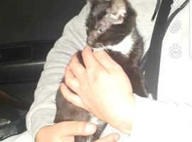 9 weeks old kitten