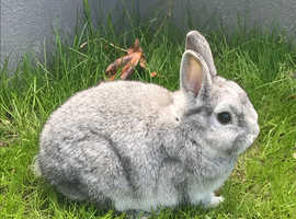 2 rabbits and cage for sale