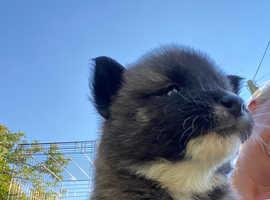 Huskita puppies