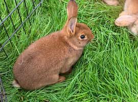2 x Baby Rabbits