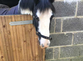13.1 coloured mare - ideal mother daughter share