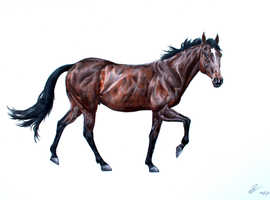 Contemporary specialist horse portraits
