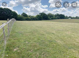 Wanted - Field for grazing