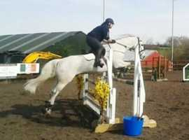 Jumping school master