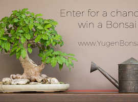 Win a FREE Bonsai Tree! Perfect for urbanites
