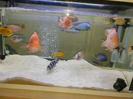 two aquariums 74x34x41cm 40x40x42