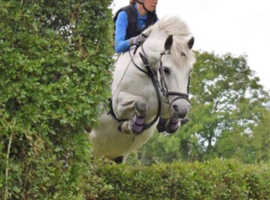 Allrounder competition pony