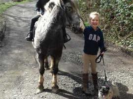 Lead rein, first ridden pony