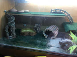 Vivarium complete setup with accessories ready for reptile