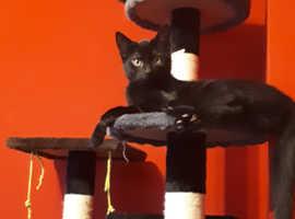 I have 2 black kittens boys