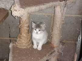Farm bred kittens for sale