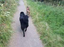 Merry Mutts - Dog Walking snd pet services  Dewsbury & Wakefield   .