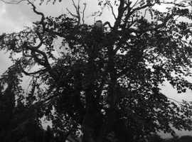 A.W. Tree Services