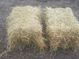 Hay For Sale This Years £3 Small Bales From Field