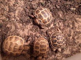 Horsefields Tortoises 2020