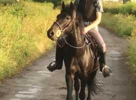 Kids pony