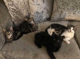 4 STUNNING kittens for sale :)