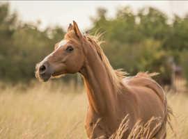 Horse exercise/yard work