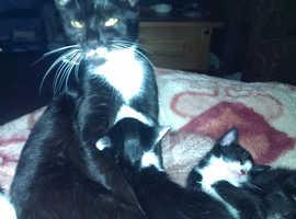 3 x kittens