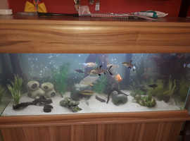 4 foot 225 ltr Fish tank with filter, stand, and everything you see