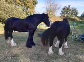 Horse grazing in Drayton Somerset