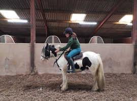 Super 12.2 cob pony