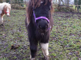 7 Months old colt