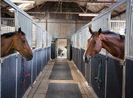 Queenz Equestrian AUTUMN OFFER 20% OFF 1ST MONTH LIVERY*